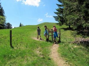 Nach einem kurzen Waldanstieg erreicht man den freien Gipfelrücken