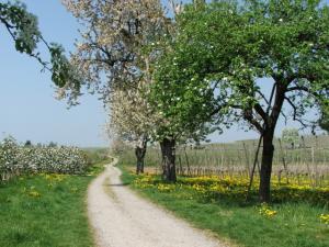 Foto: Tourist-Information Nonnenhorn – Naturwanderweg Nonnenhorn zur Blüte